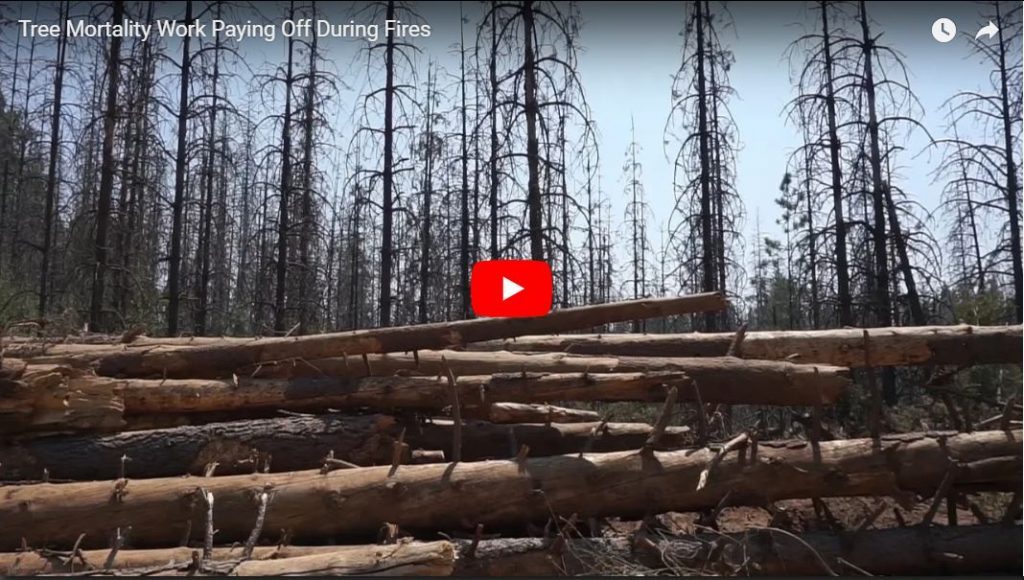 Tree Mortality Work Paying Off During Fires