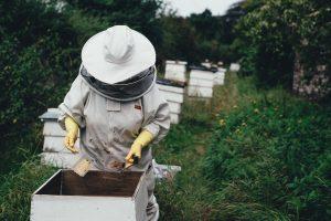 Bee Safe program