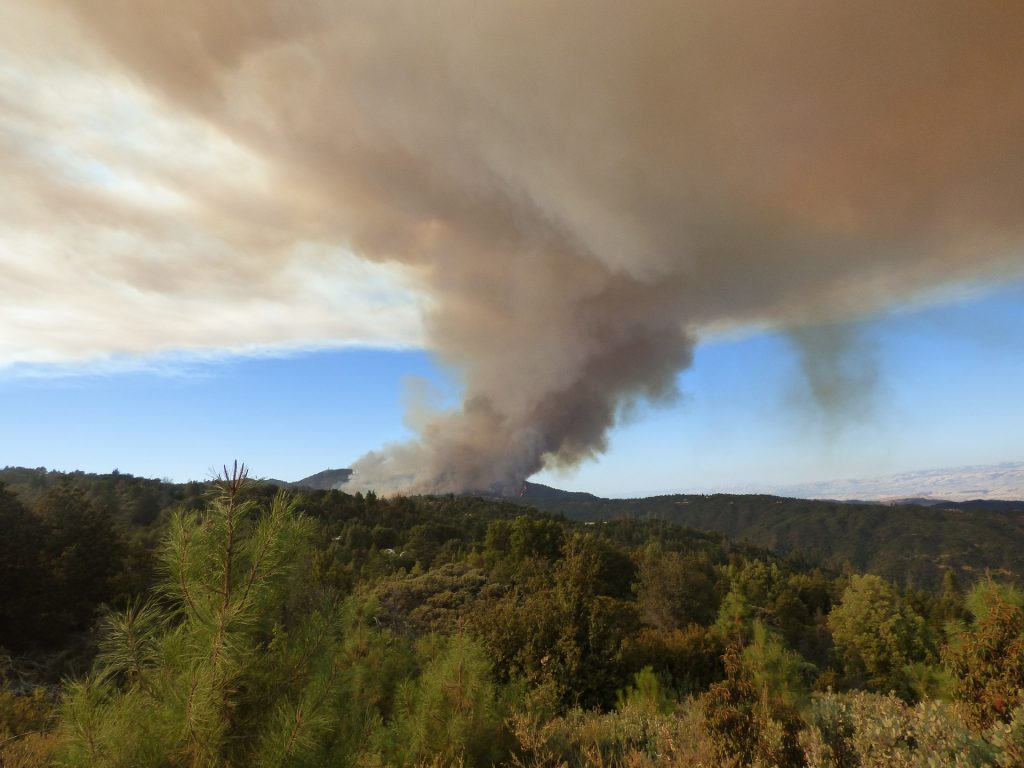 Manage the Forest to Control Wildfires