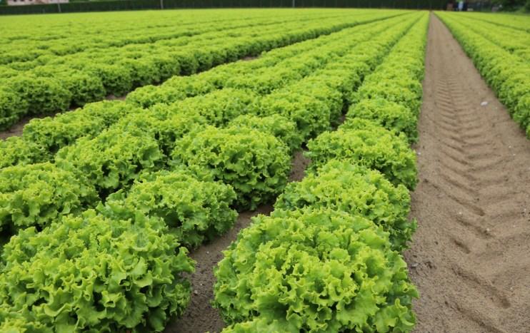 E. Coli Outbreaks for Leafy Greens