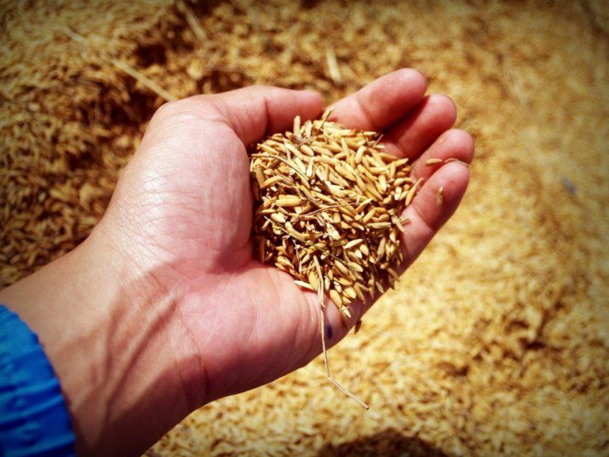 usmca rice