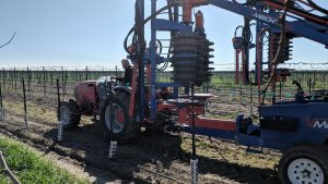 mechanical vineyard pruning