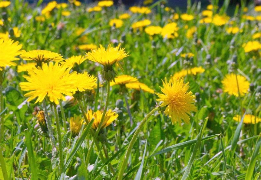 weeds