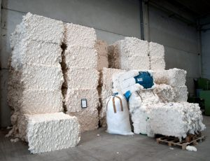 world cotton day