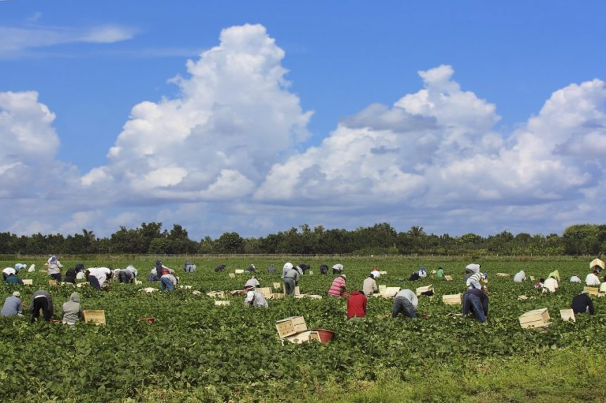 agricultural immigration bill