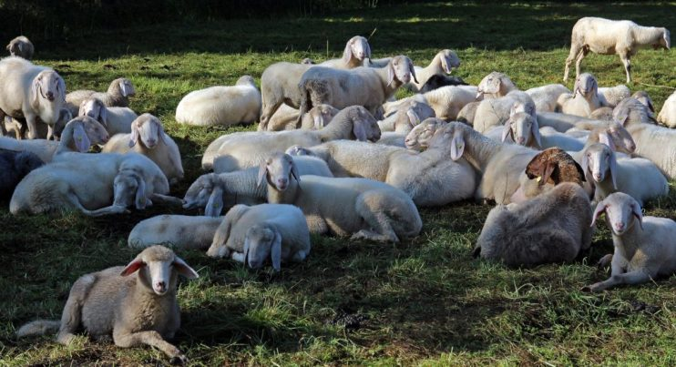 livestock grazing