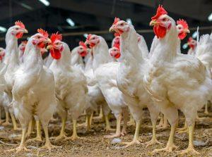 U.S. Poultry Companies