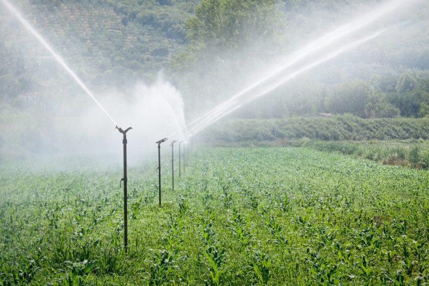 irrigated lands