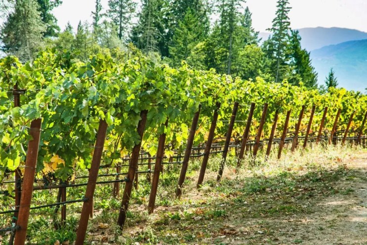 grape diseases - miravis prime