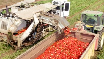 Tomato Trade Agreement with Mexico Ends Amidst Dumping