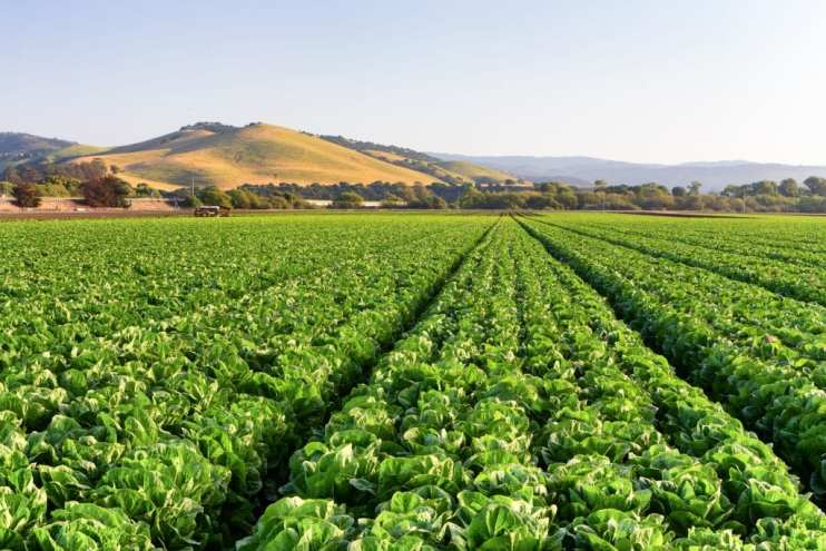 Food Safety Measures - leafy greens