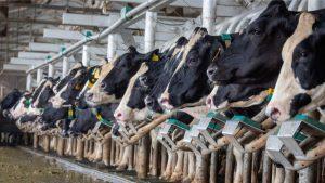 California Dairy Quota - QIP