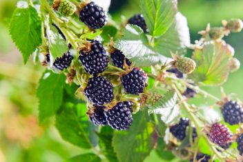 new blackberry eclipse