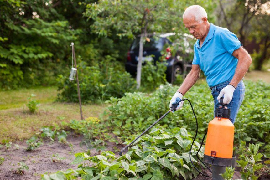 homemade pesticides