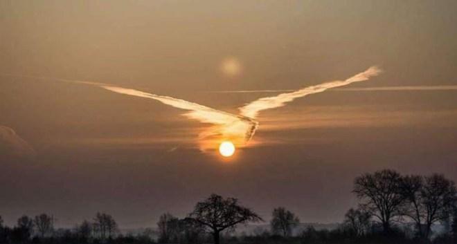 Cloud Bird