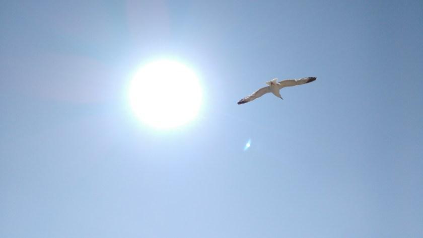 nature-bird-wing-light-sky-seabird-fly-seagull-gull-flight-blue-blue-sky-birds-portugal-sol-day-atmosphere-of-earth-1218935