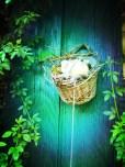 Figurine nid d'oiseaux devant volet vert de l'atelier du jardin, Plancher bas mai 2013