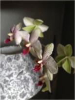 Un petit oiseau s'approche de cette fleur d'orchidée
