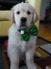 All dressed up for his first St. Pats