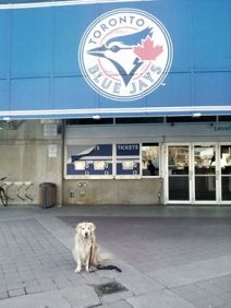 Visiting The Rogers Centre