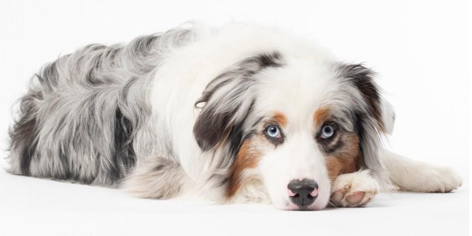 Tamp Pet Photography Studio_Cleo