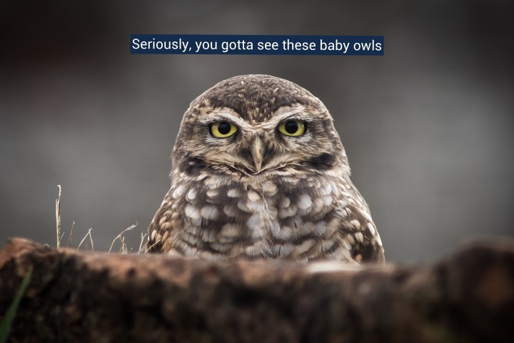 The Two Most Amazing Baby Owls You Will Ever See