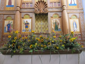 Sunflowers at UNM Chapel