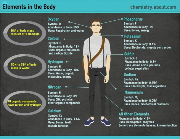 Elements in the Body from chemistry.about.com