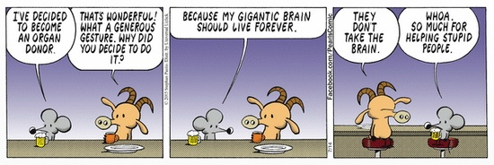 Pearls Before Swine Organ Donor