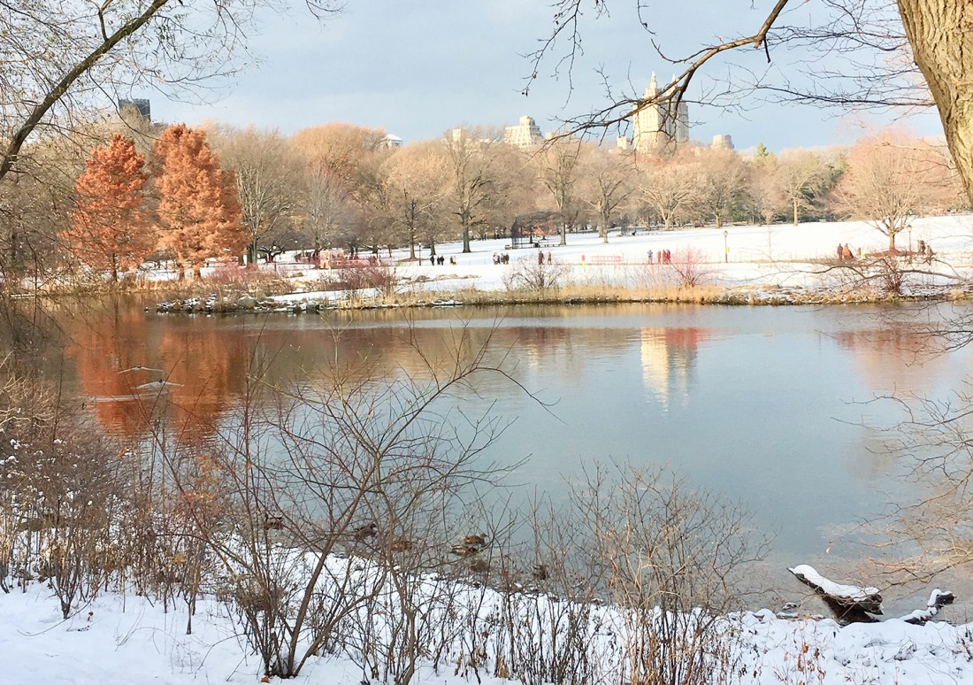 Central Park in Winter by A Good Hue