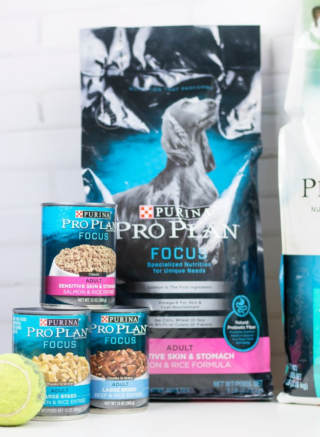 Putting a Focus on Pet Health with Purina Pro Plan - A Good Hue
