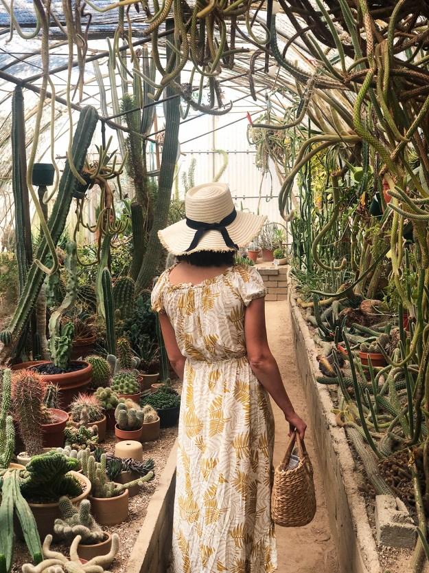 Moorten Botanical Garden in Palm Springs | A Good Hue