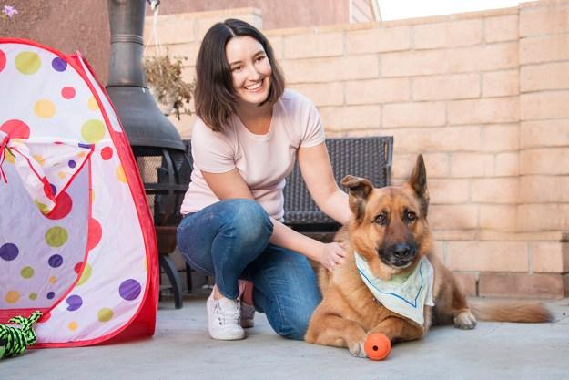 Adopting German Shepherd Dog | A Good Hue