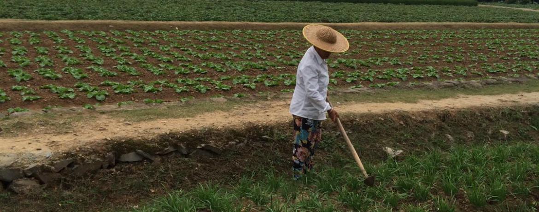 MTC coltivazioni Bio Erbe