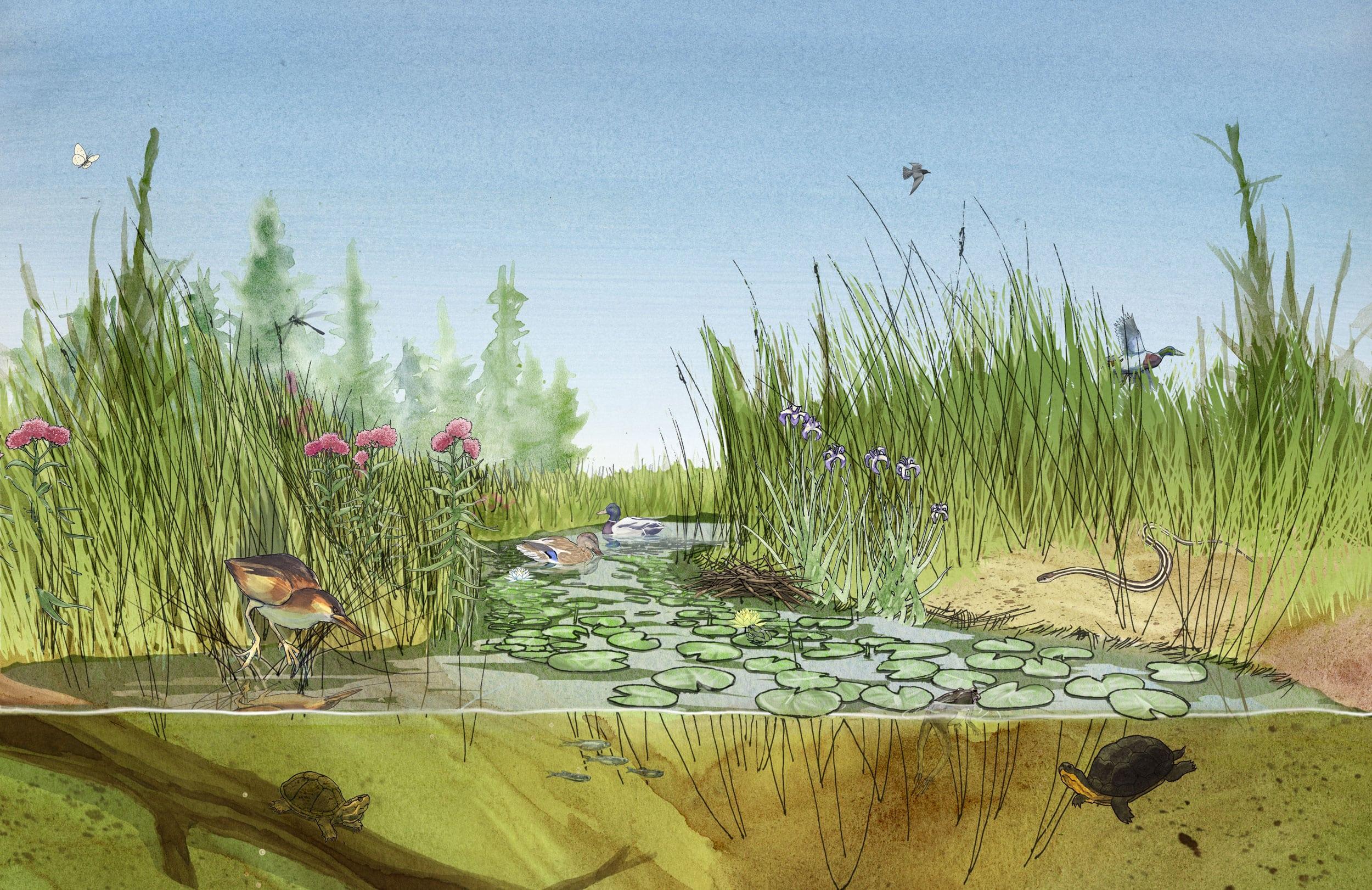 Chris Coles Wildlife And Habitat Along The Trent Severn