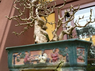 Bonsai tree at Nan Lian Garden