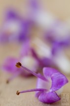 Macro of Small Purple Flowers