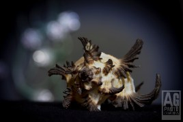 Artistic Macro Shells
