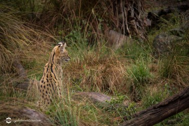 zoo-feb17-09