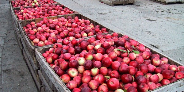 Farm Profile: Champlain Orchards
