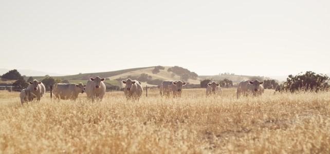 Rancher Profile: Jessica Schley and Broken Arrow