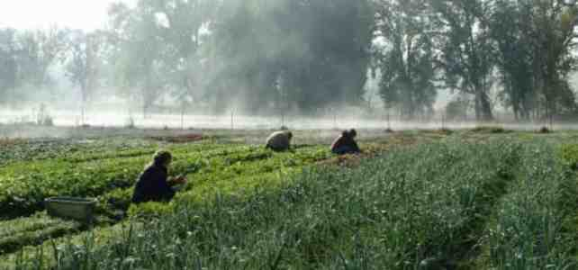 Biodynamic Farming Opportunity at Live Power Community Farm (Calif.)