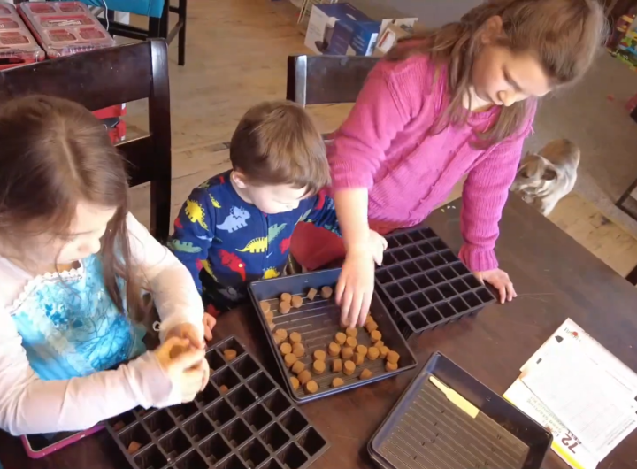 Planting our First Seeds