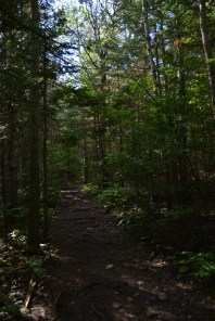 Marr Lake Trail