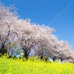 県庁のマーケティング・コラム2「地産地消・上田城千本桜祭り直売編まとめ」