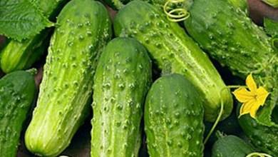 فيروس موازيك الخيار Cucumber mosaic virus ( Cm)