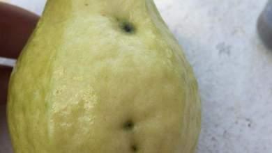 Photo of كيفية القضاء على ذبابة الفاكهة .. في 8 رسائل مهمة