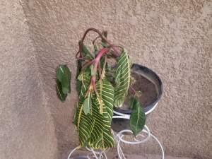 ذبول النباتات