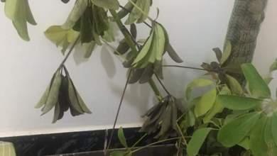 Photo of اسباب ذبول وموت الشتلات والاشجار المنزليه