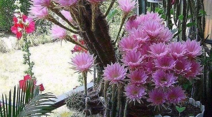 كيفية تسريع نمو النباتات